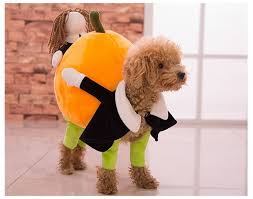 Cheap Dog Costumes Halloween 55 Halloween Dog Costumes Images Animals Pet