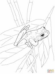 masked frog mask template for kids tree frog swimming coloring