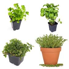diy tabletop herb garden