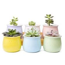 amazon succulents amazon com t4u 2 75 inch ceramic summer trio succulent plant pot