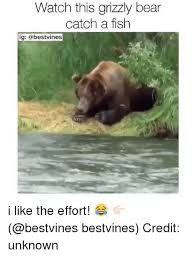 Bear Memes - 25 best memes about grizzly bear grizzly bear memes