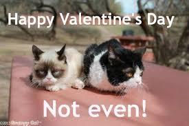 Grump Cat Meme Generator - grumpy cat love the best cat 2018