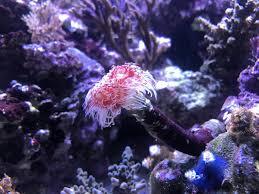 christmas tree rock coral part 36 sea life the christmas tree