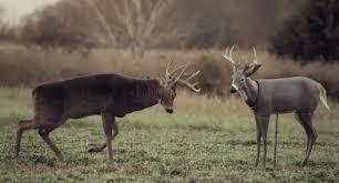 Redneck Hay Bale Blind Watch A Big Missouri Buck Destroy A Decoy From Inside A Hay Bale