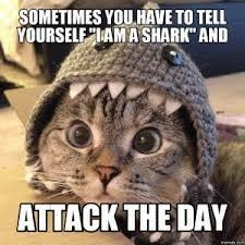 Cute Kitten Memes - image result for funny cute kitten memes cat kitten stuff from