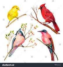 watercolor bird set red northern cardinal stock illustration