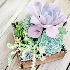 succulent centerpieces succulent wedding centerpiece let s get hitched