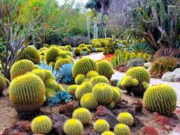 cactus facts world of succulents