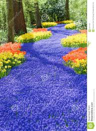 field of spring flowers stock photo image of color blooming