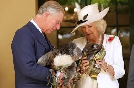 prince charles u0026 camilla cuddle koalas in adelaide photos huffpost