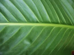 beautiful plants free beautiful plant texture texture l t