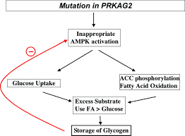 amp activated protein kinase in the heart circulation research