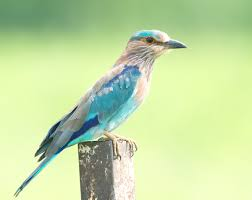 bird festival launches to promote ecotourism in india ecowanderlust