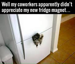 Fridge Meme - new fridge magnet funny pictures quotes memes funny images