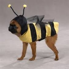 Funny Dog Costumes Halloween 13 Dog Costumes Images Animal Costumes