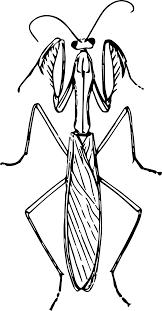 top 94 praying mantis clip art free clipart spot