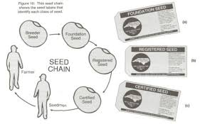 seed and seed quality nc state extension publications