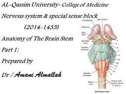 Brain Stem Anatomy Brain Stem Medulla Oblongata Ppt Video Online Download