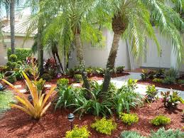 astonishing florida landscape design of a backyard with palm trees