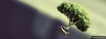 tree in flight cover fbcoverlover