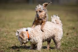 comment empecher mon chien de monter sur le canap votre chien est il dominant avec les autres chiens