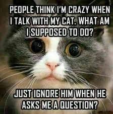 Talking Cat Meme - talking with my cat album on imgur