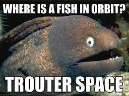 Funny Fish Memes - funny fish puns sea creature memes