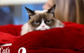 grumpy cat u0027grumpy cat u0027 has made way more money than you