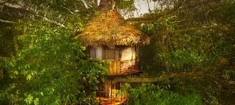 treehouses treehouse lodge