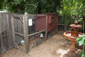 rodent control in and around backyard chicken coops pests in the