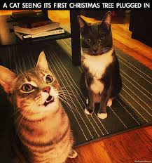 Christmas Cat Memes - a cat seeing its first christmas tree plugged in imglulz
