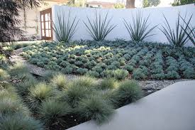 drought resistant landscaping landscape contemporary with 50s