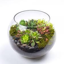 succulent terrarium billies flower house