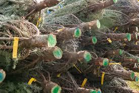 tannenbaum farms christmas tree hunt the mitten adventure