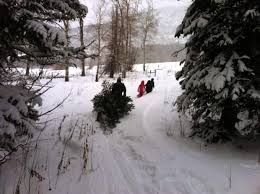 Cutting Christmas Tree - christmas tree cutting permits now available at u s forest