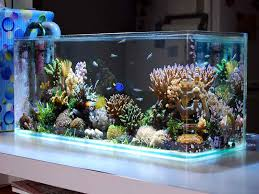 Home Aquarium Designs Decoration Excellent Simple Aquascape - Home aquarium designs