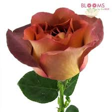 cheap same day flower delivery wholesale flowers bulk wedding flowers online bloomsbythebox