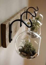 hanging glass terrarium small garden ideas