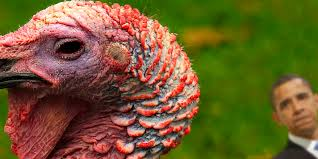 obama pardons thanksgiving turkey republicans oppose obama u0027s decision to pardon 2 turkeys last
