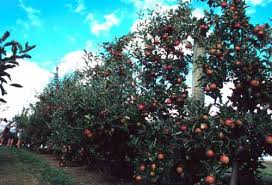 fruit trees for sale us tree and plant nursery list fruit crops