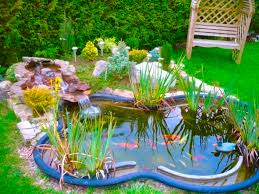 lovely clean backyard pond architecture nice