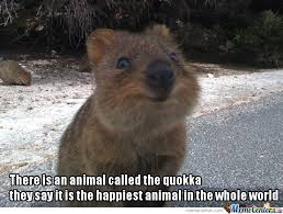 Love You So Much Meme - quokka the cute love you so much baby by bemar dayot meme center