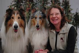 spirit halloween keene nh blog and news dog training keene nh dog friendly dog