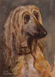 afghan hound jackets glamour in the dog world comes in many forms but the afghan hound