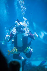 200 children make christmas ornaments at georgia aquarium u0027s