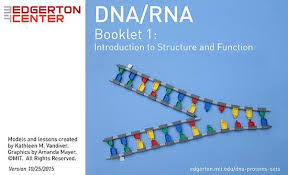mit edgerton center dna rna edgerton center