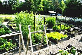 backyard vegetable garden layout garden layout ideas free layouts awesome vegetable how to layou