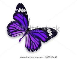 best 25 purple butterfly ideas on butterfly