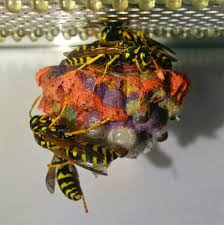 when given colored construction paper wasps build rainbow colored