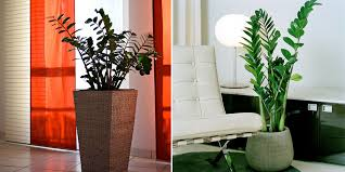 the 10 best plants for apartments u2014 the hoffman team